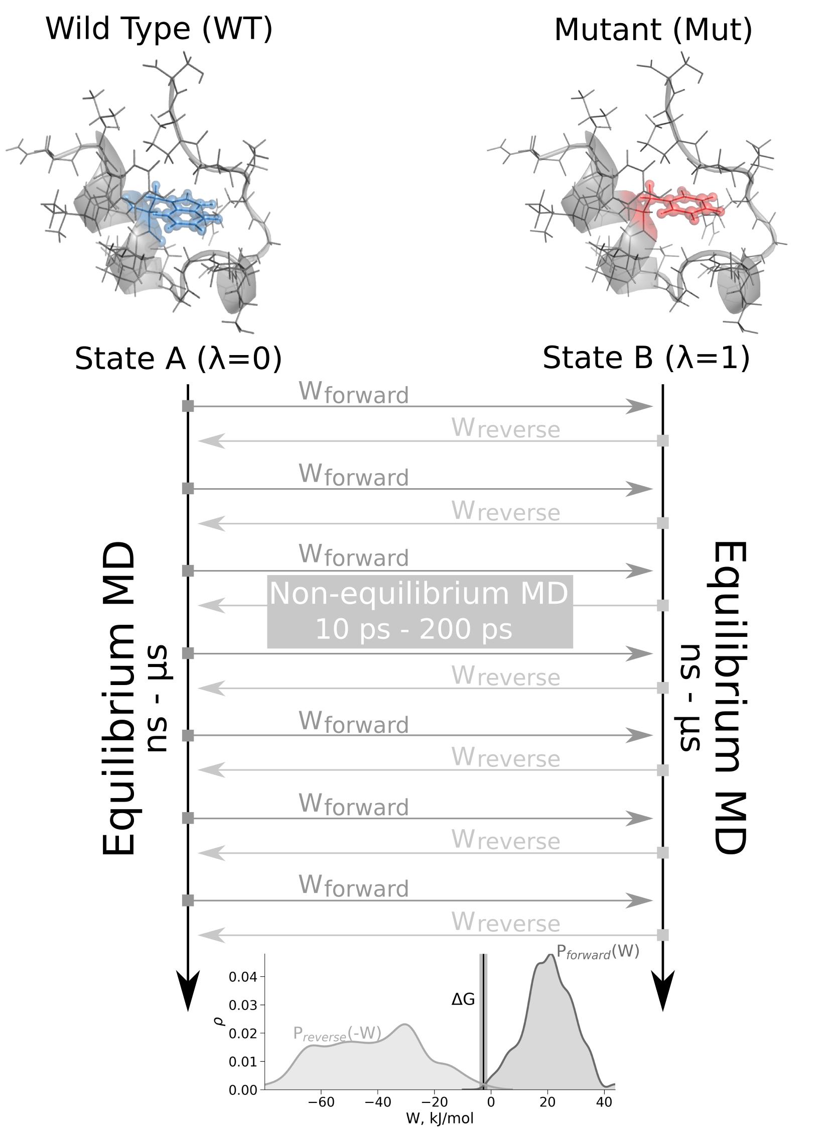 Mutation free energy calculations